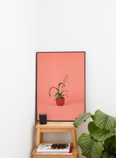 Indoor flora - Stijlmeisje