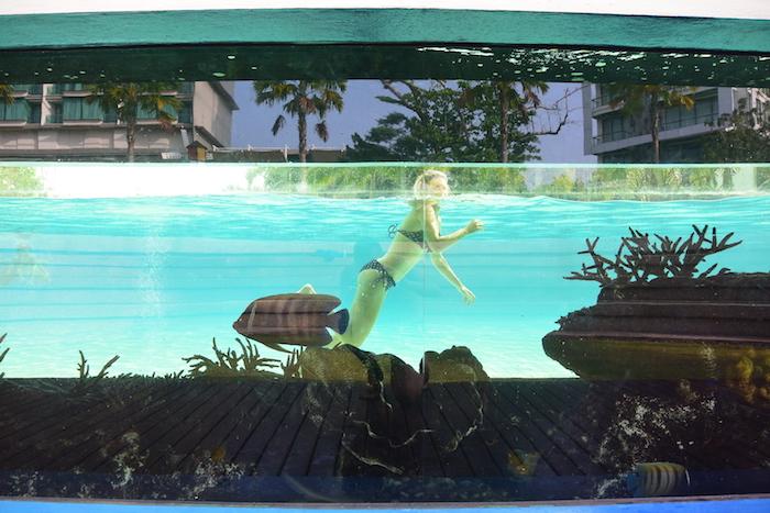 Marriott zwembad haaien