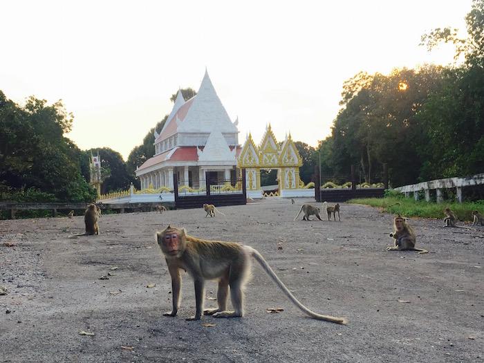 Omgeving Rayong